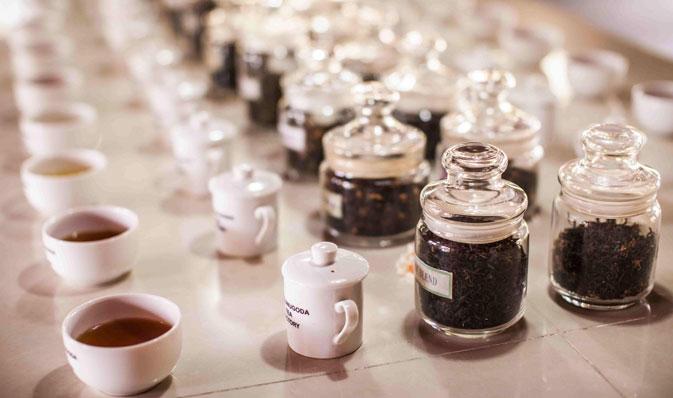 Visite d'une plantation de thé